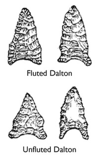 Dalton Tradition - Examples of fluted and unfluted Dalton points.