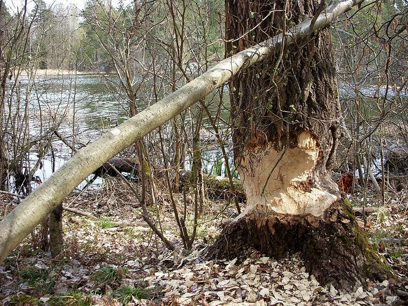 Dammtorpssjön 2009d