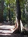 Dappled light within the Scenic Reserve. - panoramio.jpg