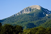 a conifer-covered mountain with a bare, rounded top
