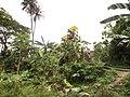 Deïdo Douala January 2013 47.JPG