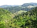 Dealuri dinspre Leurdă spre Munteni - panoramio.jpg