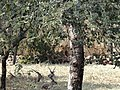Deers resting in the park 02.jpg
