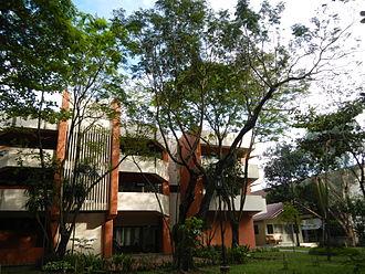 Delonix regia - Flamboyant tree (Ateneo de Manila University).