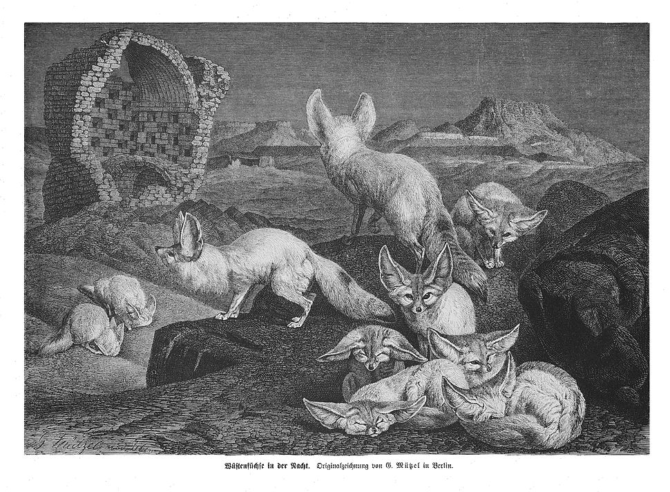 Die Gartenlaube (1875) b 033