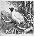 Die Gartenlaube (1875) b 529.jpg