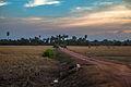 Dirt Path (8425933916).jpg