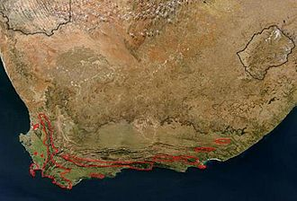 Protea cynaroides - Image: Dist Map P Cynaroides 3