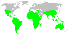 Distribution.theraphosidae.1.png