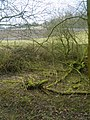 Disused Canal - geograph.org.uk - 1726063.jpg