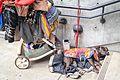 Dog and Cart.jpg