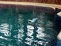 Dolphins (7980992862).jpg