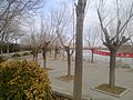 Dongying, Shandong, China - panoramio (559).jpg