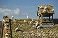 Dovecote, Snowshill Manor.jpg