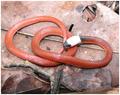 DrepanoidesAnnomalus.PNG