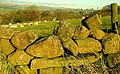 Drystone wall, Slemish (5) - geograph.org.uk - 1093333.jpg