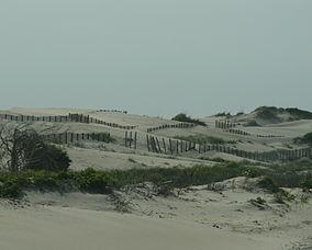 DunesPeaIslandJune2007.JPG