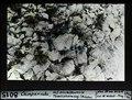 ETH-BIB-Campanula, auf Schrattenkalk Tomlishornweg, Pilatus-Dia 247-08015.tif