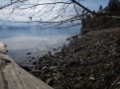 Early Spring Flotsam on the Okanagan Lakeshore in Lakeview Heights.png