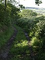 East Devon Way below Woodland Farm - geograph.org.uk - 447862.jpg