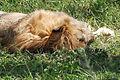 Eastern Serengeti 2012 06 01 3394 (7522719174).jpg