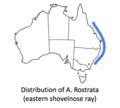 Eastern shovelnose ray distribution.png