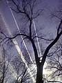 El arbol de la vida - panoramio.jpg