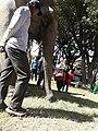 Elephant20171111 122129.jpg