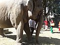 Elephant20171111 122217.jpg
