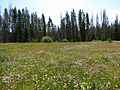 Elk Meadow (15197331338).jpg