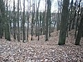 Entenschnabel-ObenFrohnauAmRosenanger-AufDerEiszeitDüne-BlickZurChaussee2.jpg