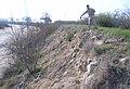 Erosion on Kings River levee (9627966179).jpg