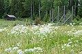 Ersk-Matsgården - KMB - 16001000299710.jpg