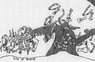Equus scotti - Assemblage of bones, illustrated as discovery in situ, of Equus scotti