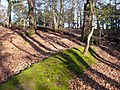 Evening Woodland at RSPB Arne - geograph.org.uk - 732876.jpg