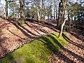 Evening Woodland at RSPB Arne - geograph.org.uk - 732876.jpg