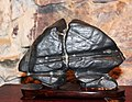 Exhibition Suiseki and Shangshi Prague 2011 2324.jpg
