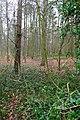 Eycot Wood - geograph.org.uk - 1105334.jpg