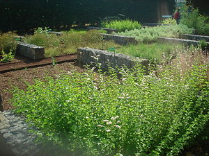 English: The aromatic herb garden, with exampl...