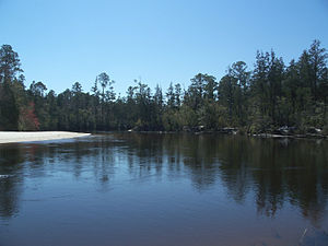 Blackwater River (Florida) - Blackwater River in Blackwater River State Park