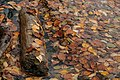 Fall Log, Little Trout Bay, Ontario (2953790359).jpg
