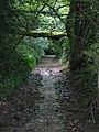 Fallen tree across byway ST7973-01 - geograph.org.uk - 1411842.jpg