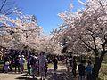 Fanatical about Prunus (8712723192).jpg