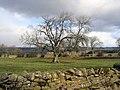 Farmland near Heatheridge - geograph.org.uk - 1195383.jpg