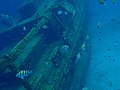 Fauna marina de Barbados 2007 010.jpg