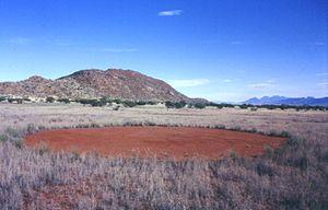 Fairy circle (arid grass formation) - A single fairy circle, Namibia