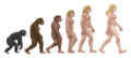 Female human evolution.png