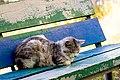 Feral cat in Krasnodar 2012-09-23.jpg