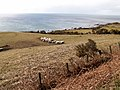 Field and coast by Helmsdale - geograph.org.uk - 149304.jpg