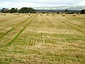 Field of Bales at Northpark - geograph.org.uk - 565475.jpg